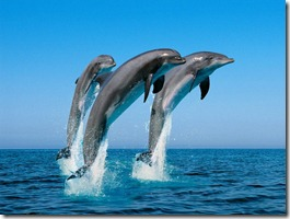 dolphins-jump-out-of-water